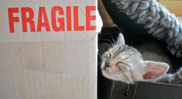 Kitten and 'fragile' sign